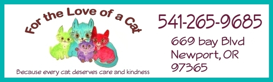 adorable adoptable cats, spay and neuter, For the Love of a Cat, in Newport Oregon
